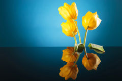 Colorful image of the back of three yellow tulips Royalty Free Stock Photos