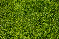 Colorful image of green grass under bright sunlight. Abstract background, film effect and author processing.  royalty free stock images