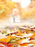 A colorful image of many fallen autumn leaves Royalty Free Stock Photo