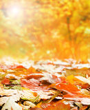 A colorful image of many fallen autumn leaves Royalty Free Stock Photos