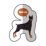 Colorful image middle shadow sticker with doberman pinscher dog thinkin bone. Vector illustration Royalty Free Stock Image