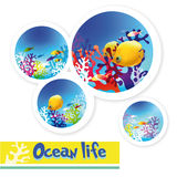 Colorful images of underwater ocean life Stock Images
