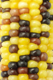 Colorful Indian corns background Royalty Free Stock Image
