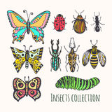 Colorful insects collection. Hand drawn set for icons, logo or print. Vector illustration Royalty Free Stock Photos