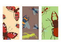 Colorful insects icards wildlife wing detail summer bugs wild vector illustration Stock Photo