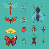 Colorful insects icons isolated wildlife wing detail summer bugs wild vector illustration. Nature pest small animal art sign element stag detail graphic Royalty Free Stock Photography