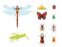 Colorful insects icons isolated wildlife wing detail summer bugs wild vector illustration. Nature pest small animal art sign element stag detail graphic Stock Photo