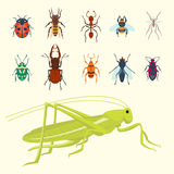 Colorful insects icons isolated wildlife wing detail summer bugs wild vector illustration Stock Photography
