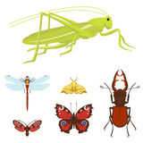 Colorful insects icons isolated wildlife wing detail summer bugs wild vector illustration. Nature pest small animal art sign element stag detail graphic Stock Photography