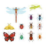 Colorful insects icons isolated wildlife wing detail summer bugs wild vector illustration Royalty Free Stock Image