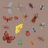 Colorful insects icons isolated wildlife wing detail summer bugs wild vector illustration Stock Photos