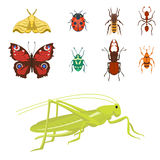 Colorful insects icons isolated wildlife wing detail summer bugs wild vector illustration. Nature pest small animal art sign element stag detail graphic Royalty Free Stock Photo