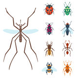 Colorful insects icons isolated wildlife wing detail summer bugs wild vector illustration. Nature pest small animal art sign element stag detail graphic Stock Images