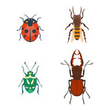 Colorful insects icons isolated wildlife wing detail summer bugs wild vector illustration. Nature pest small animal art sign element stag detail graphic Stock Photos