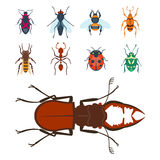 Colorful insects icons  wildlife wing detail summer bugs wild vector illustration Royalty Free Stock Images