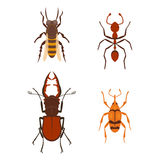 Colorful insects icons  wildlife wing detail summer bugs wild vector illustration Royalty Free Stock Photo