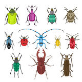Colorful insects vector biology collection Royalty Free Stock Photo