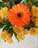 Colorful inside flowers. Orange flower inside Stock Photos