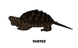 Colorful insulated kaimanawa turtle for your Royalty Free Stock Photography