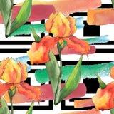 Colorful irises. Floral botanical flower. Seamless background pattern. royalty free illustration