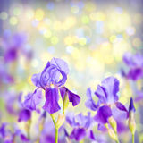 Colorful irish spring background Royalty Free Stock Image