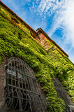 Colorful ivy covers walls Stock Image