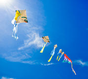 Colorful of kites Stock Images