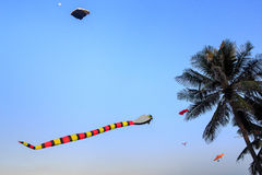 colorful kites of different shape in sky against large palm Royalty Free Stock Photography