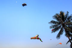 colorful kites of different shape in sky against large palm Stock Photography