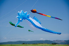Colorful kites in shapes of animals.  Stock Photos