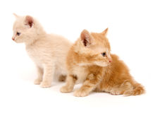 Colorful kittens on white Stock Photos