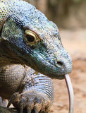 Colorful Komodo. A close up of a komodo dragon's head showing it's color and texture Royalty Free Stock Photography
