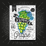 Colorful Label poster stickers food fruits vegetable chalk sketch style, food and spices. Grape green. Bio eco vegetarian raw farm fresh organic. Hand drawn Royalty Free Stock Image