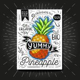 Colorful Label poster stickers food fruits vegetable chalk sketch style, food and spices. Pineapple. Bio eco vegetarian raw farm fresh organic. Hand drawn Stock Image