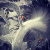 Colorful Lady Bug Stock Photography