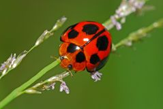 Colorful ladybird Stock Images