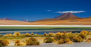 Colorful lagoon in Atacama. Desert with flamencos and a mountain on the background Stock Image