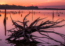 Mystical sunrise on the lake. Colorful lake background with a dead tree on the foreground. Warm colors and natural mystical scenery royalty free stock photos