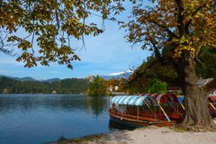 Colorful Lake Bled rowboats in autumn Royalty Free Stock Photos