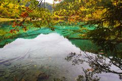 Colorful lake in Jiuzhai Valley. Beautiful lake surround by mountain with colorful trees in Jiuzhai Valley, Sichuan of China Stock Images