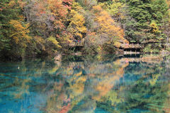 Colorful lake in Jiuzhaigou Royalty Free Stock Image
