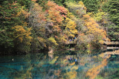 Colorful lake in Jiuzhaigou Royalty Free Stock Photos