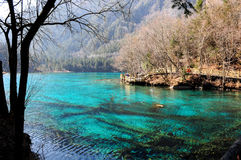 Colorful lake in Jiuzhaigou, China Royalty Free Stock Image