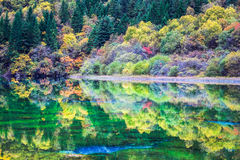 Colorful lakes in autumn at jiuzhai valley national park Royalty Free Stock Photo