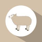 Colorful lamb animal design. Lamb icon. Livestock animal life nature and fauna theme. Colorful design. Vector illustration Royalty Free Stock Photo