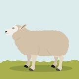 Colorful lamb animal design. Lamb icon. Livestock animal life nature and fauna theme. Colorful design. Vector illustration Royalty Free Stock Photos