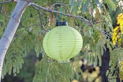 Colorful lampion in a tree. Garden in Greece stock image