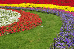 Colorful land with flower Royalty Free Stock Image