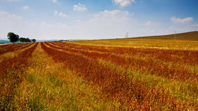 The colorful Bashang grassland Royalty Free Stock Photography