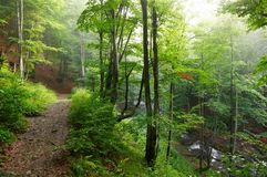 Colorful landscape with beech forest and the sun, with bright rays of light beautifully shining through the trees and morning fog. Landscape with beech forest Stock Image